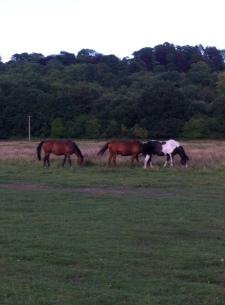 More of the beautiful countryside in Stockbridge