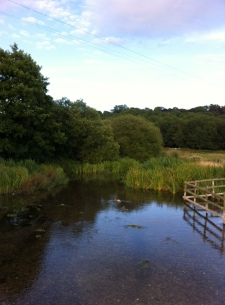 The marshes area behind where James and Emma live